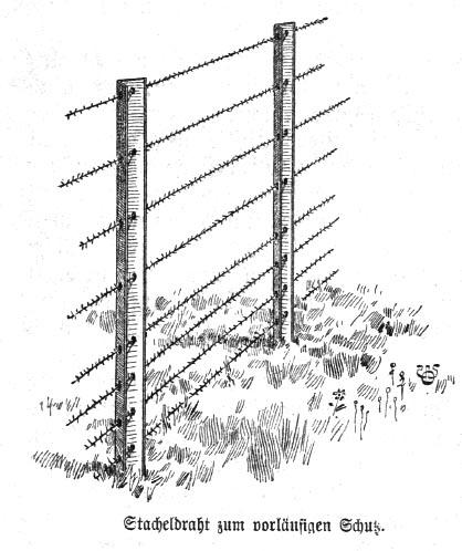 gartenzaun-schutz-mit-stacheldraht-einfriedung-bauerngarten