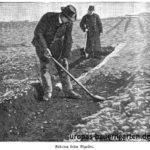 rigolen-beete-umgraben