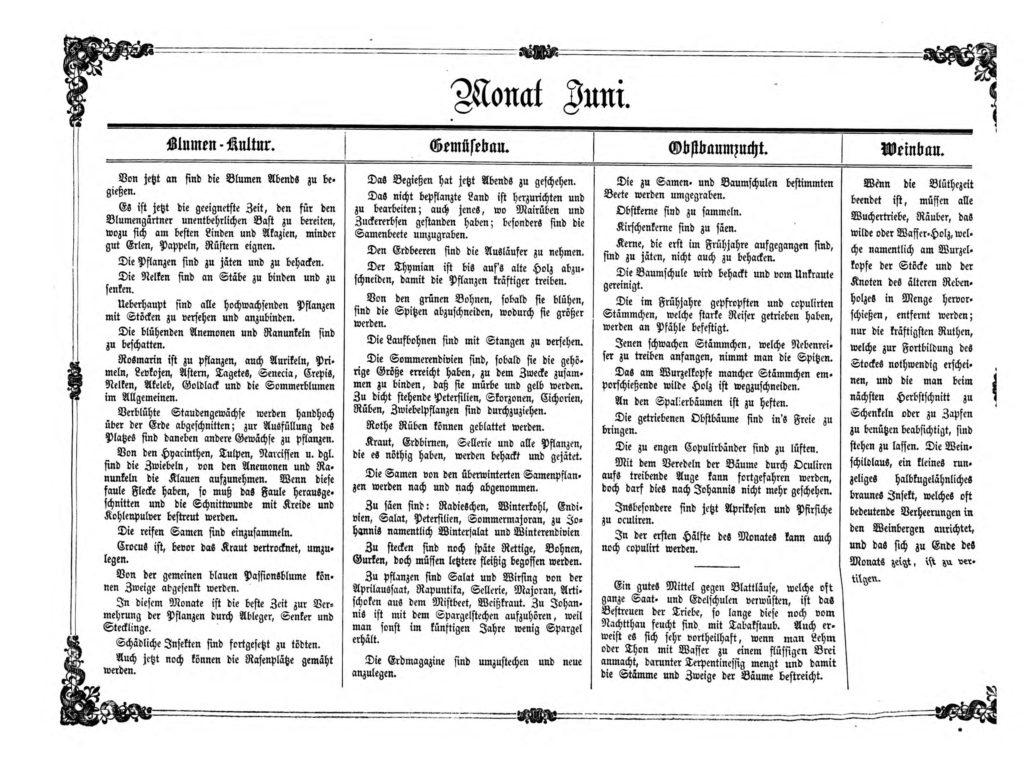 Gartenkalender für den Monat Juni von Carl Umlauff 1862 bestehend aus Blumenkultur, Gemüsebau, Obstbau und Weinbau