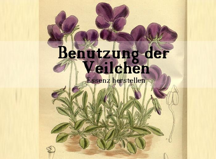 Wie man das Aroma von Veilchen konserviert