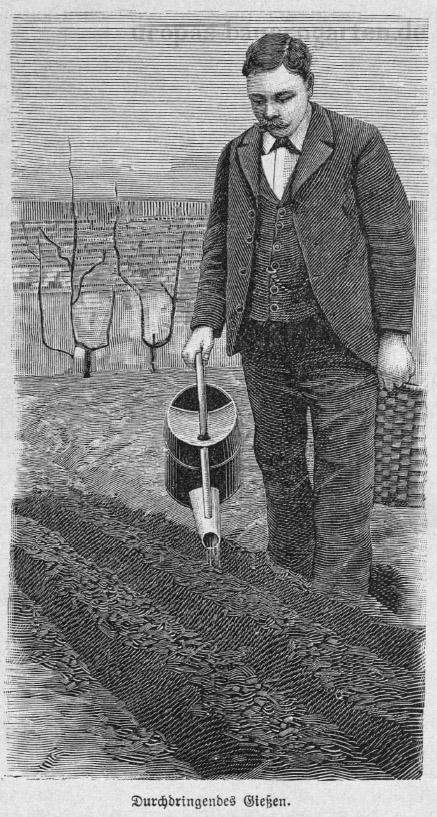 Ein Mann mit einer Gießkanne in der Hand beim Gießen seiner Beete.