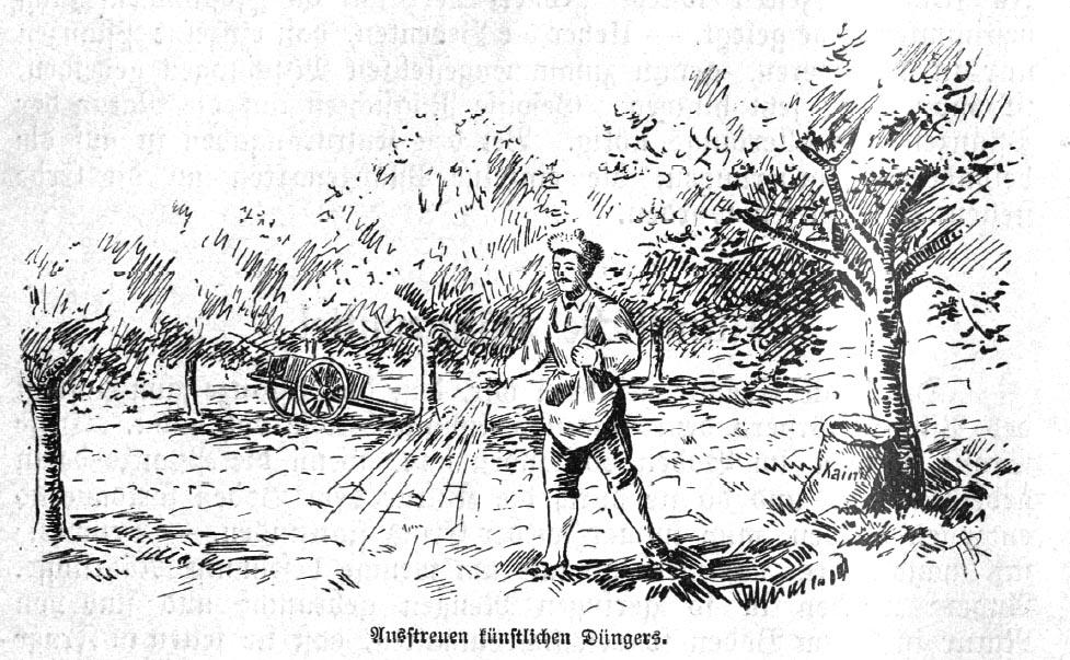 Da sBild zeigt einen Menschen, der den Garten düngt und Dünger ausstreut.