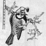 Auf diesem Bild ist eine Kohlmeise dargestellt. Diese ist die Gartenpolizei, die Insekten vertilgt.