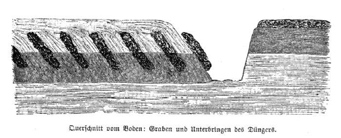 Das Bild zeigt einen Querschnitt von einem umgegrabenem Beet, in das Dünger eingebracht wurde.