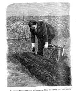 Das Bild zeigt einen Mann, der Pflanzen und Gemüse richtig aussät.