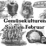 Das Bild beinhaltet typische Gemüsearten, die man im Februar aussäen kann.